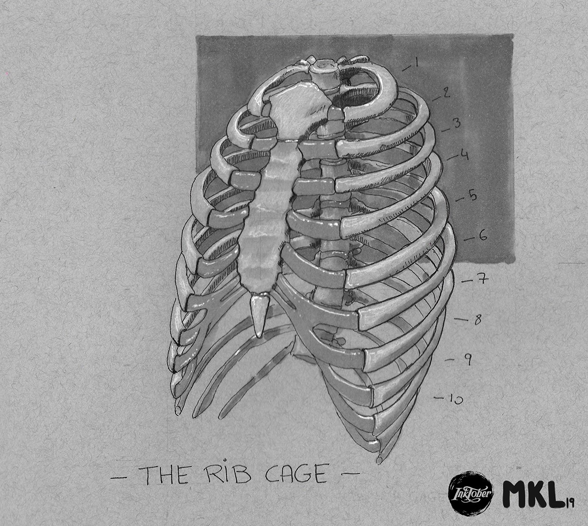 Day 3  the rib cage 2 par Haekel