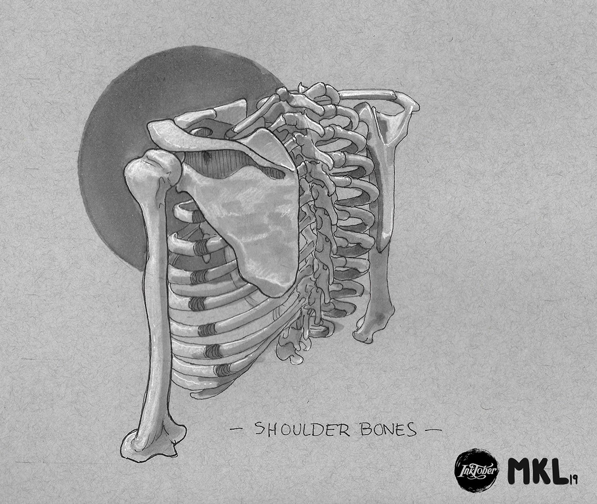 Day 4 shoulder bones 2 par Haekel